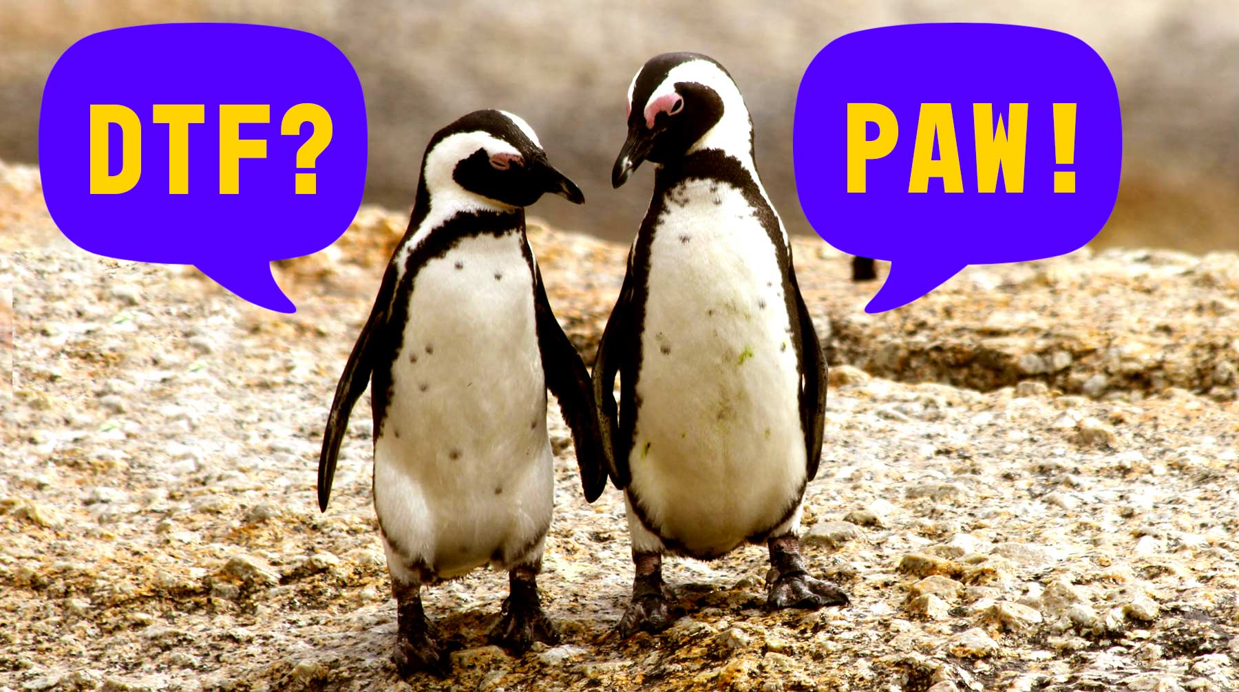 "Two penguins walking next to each other. One penguin is asking ""DTF?"" and the other one replies ""PAW!""."
