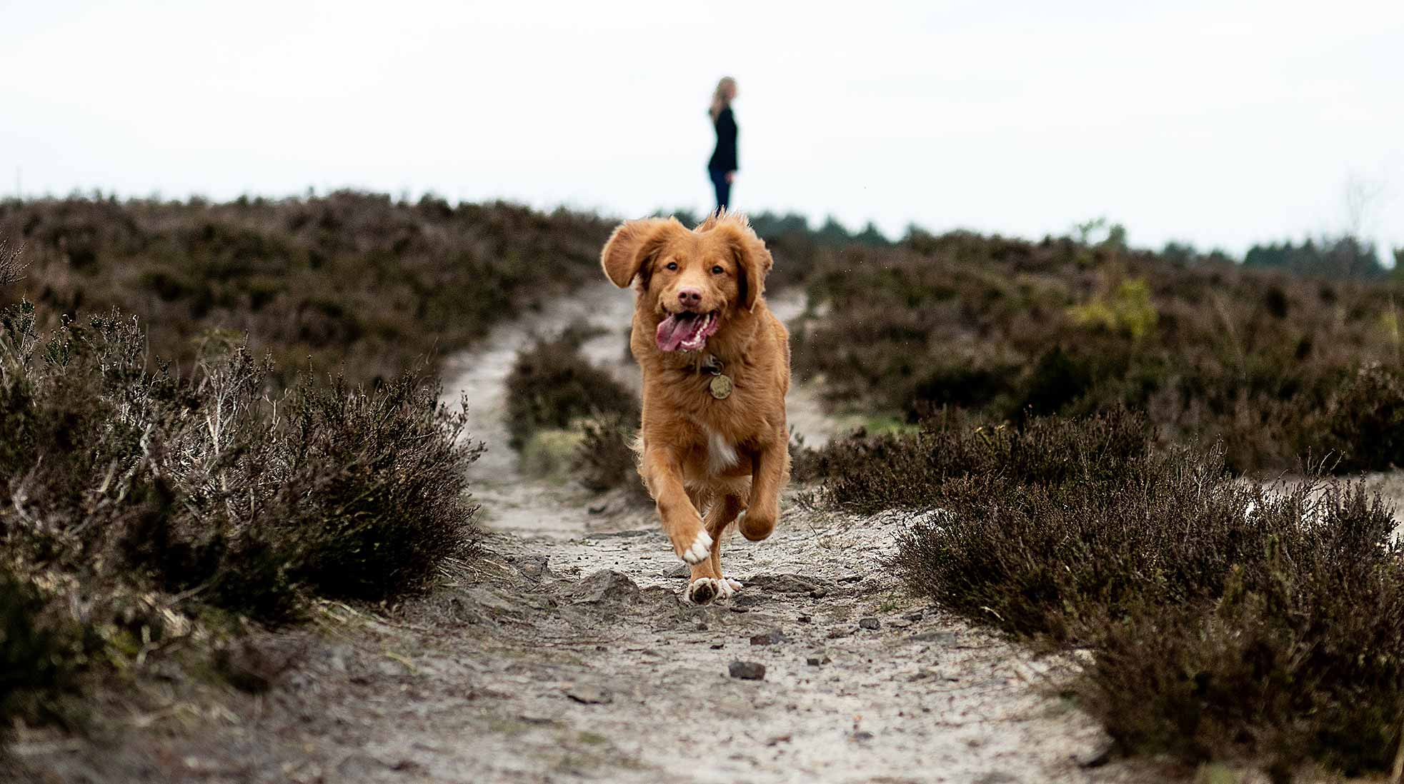 Take your dog for a more exciting walk next time. Photo: Jamie Street / Unsplash